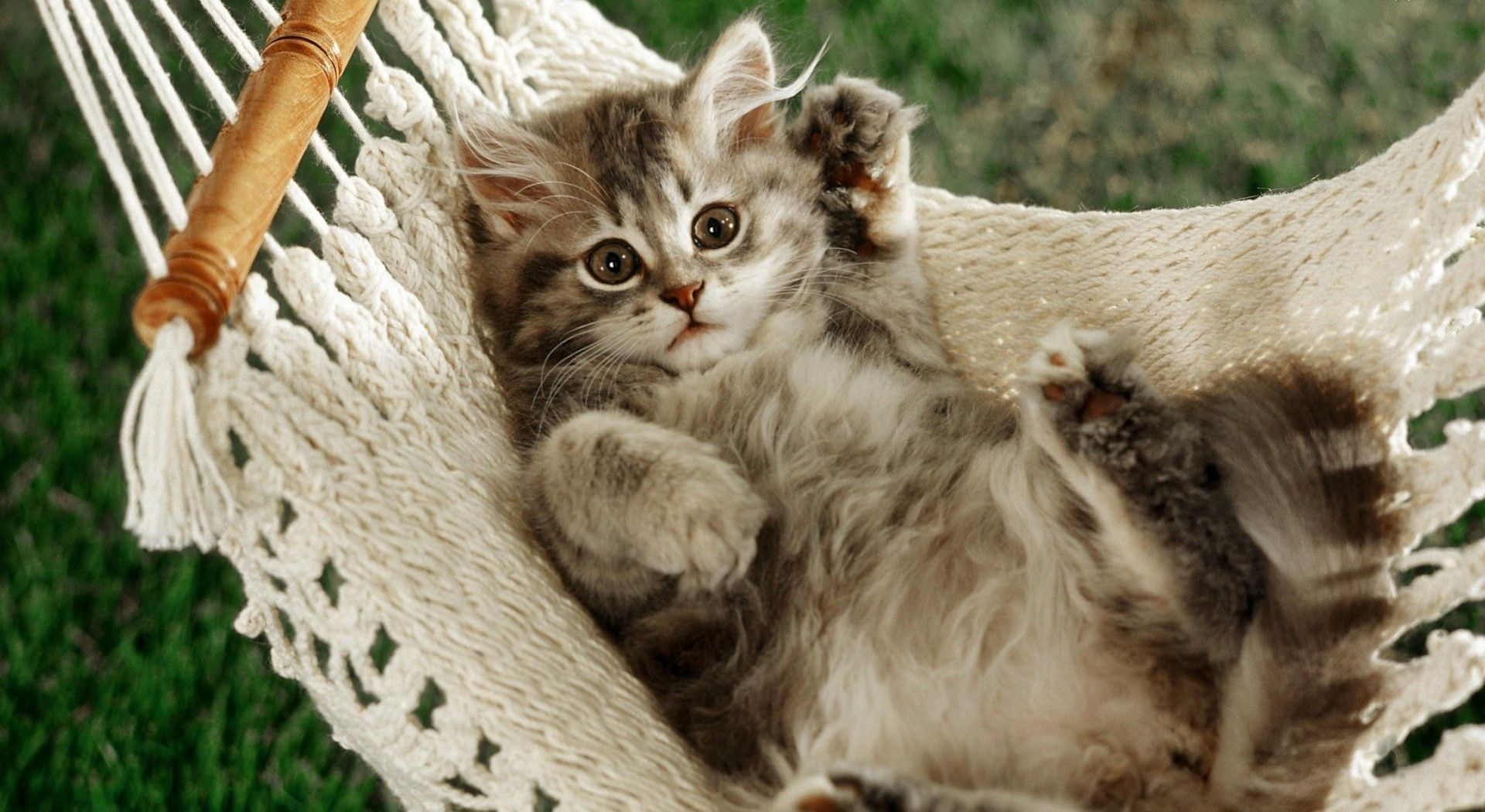 Pets In A Hammock Funny Cat In A Hammock Wallpapers And Images Kittens Cutest Cute Animals Kitten Wallpaper