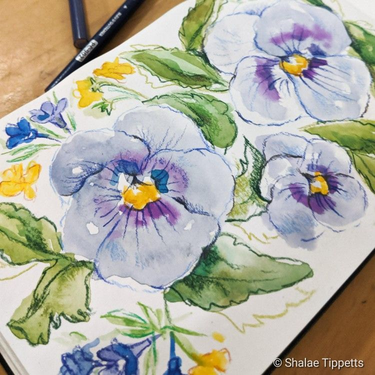 Excellent No Cost Pansies Sketch Tips Pansies Are The Colorful Flowers With Faces A Cool Weather Favorite Pansies Are Best For Bot Cost Excellent Pansies