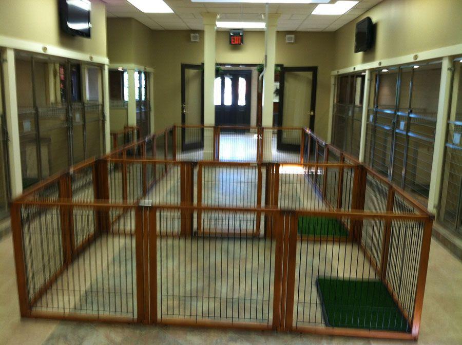 17+ Cedar grove animal hospital images