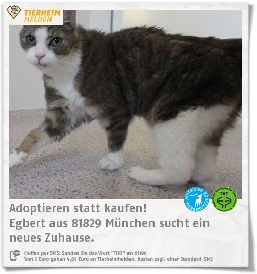Senior Egbert aus dem Tierheim München sucht ein Zuhause