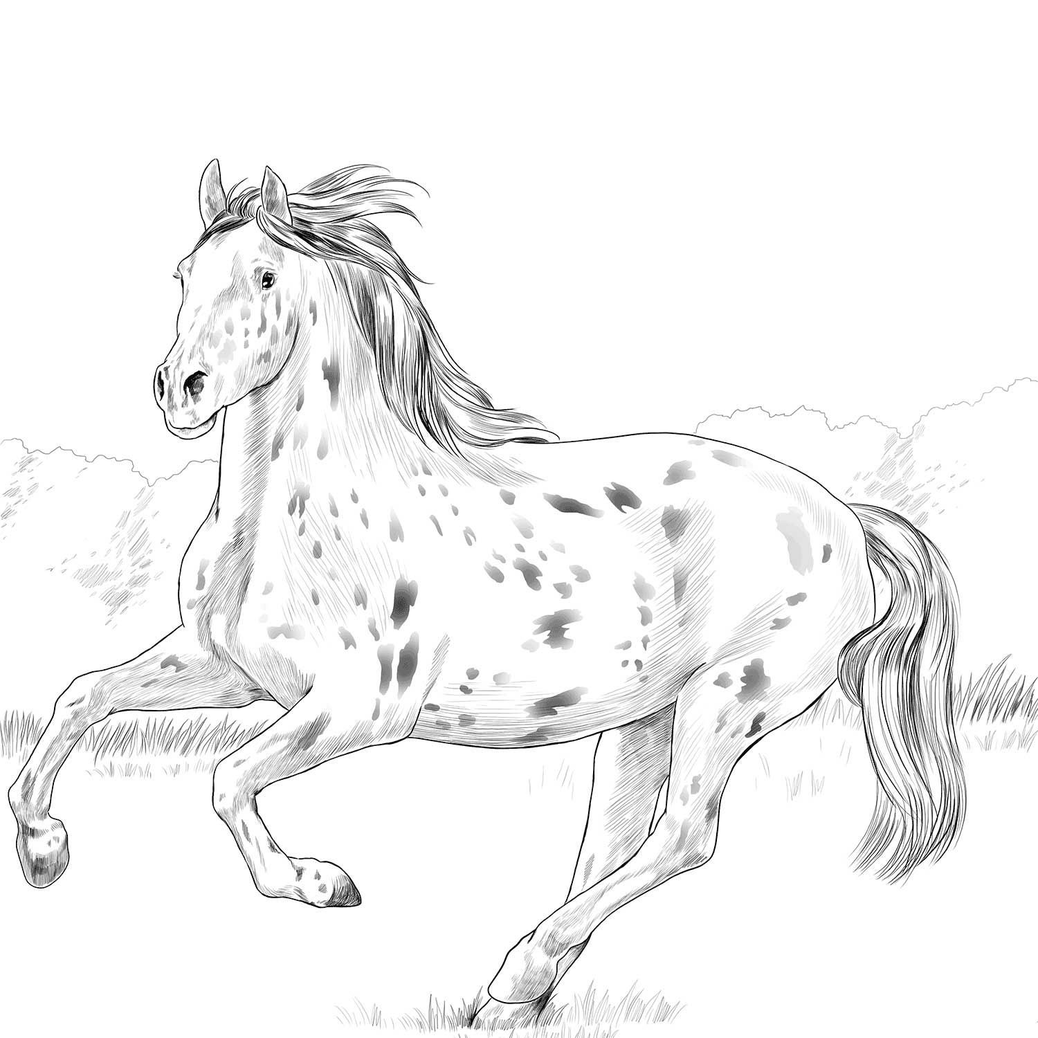 Knabstrupper Horse Coloring Page Horse Coloring Pages Horse Coloring Horse Coloring Books In 2021 Horse Coloring Pages Horse Coloring Animal Coloring Pages