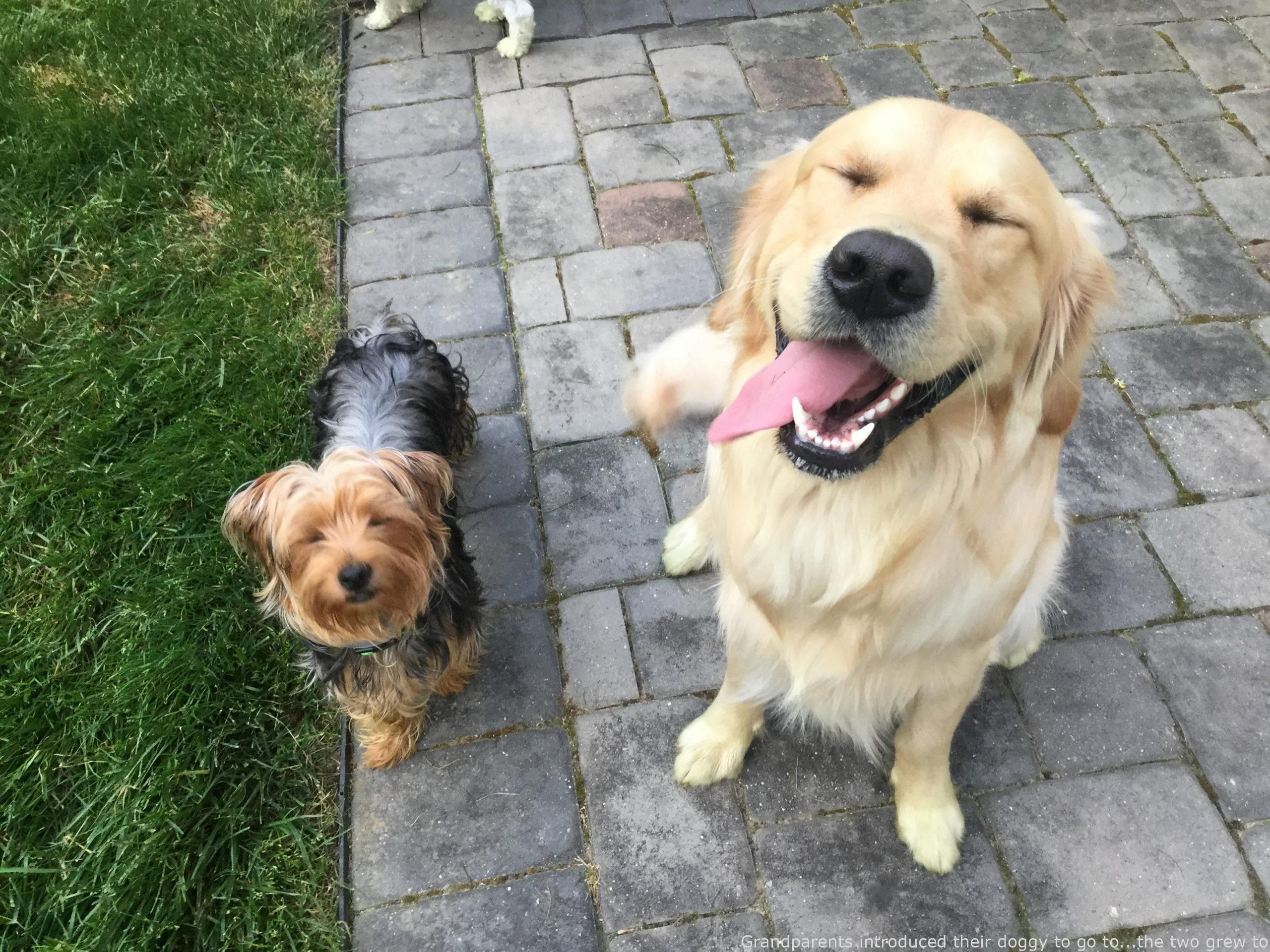 Grandparents brought their dog to pay a visit tothe two became speedy close  Grandparents brought their dog to pay a visit tothe two became speedy close friends  beautif...