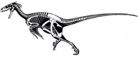 Dromaeosaurus Albertensis Paleontology Dinosaur