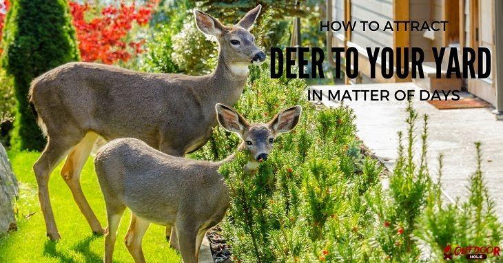 Park Art My WordPress Blog_How To Attract Deer To Your Yard In Winter