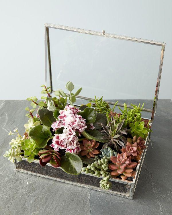 Jewelry Box Succulent Garden DIY