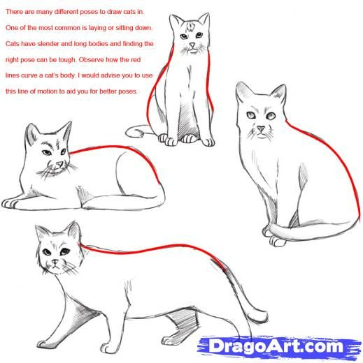 Oc Rpgroup Reference Guide Cats Drawing By Willowclan