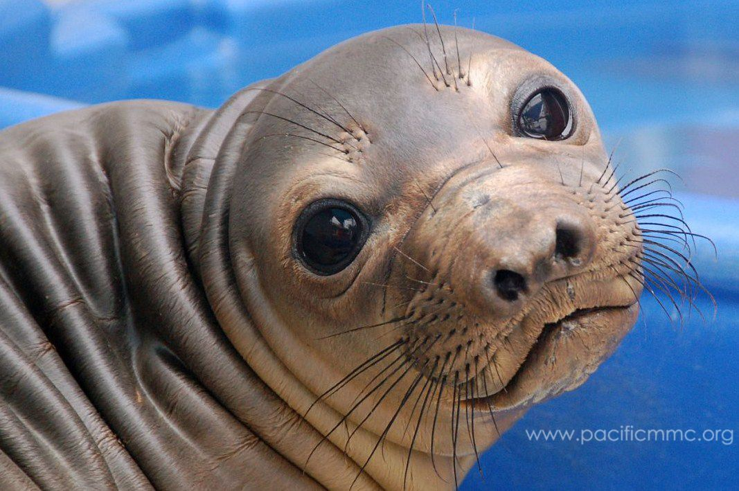 Chat with a Marine Mammal Expert by Pacific Marine Mammal