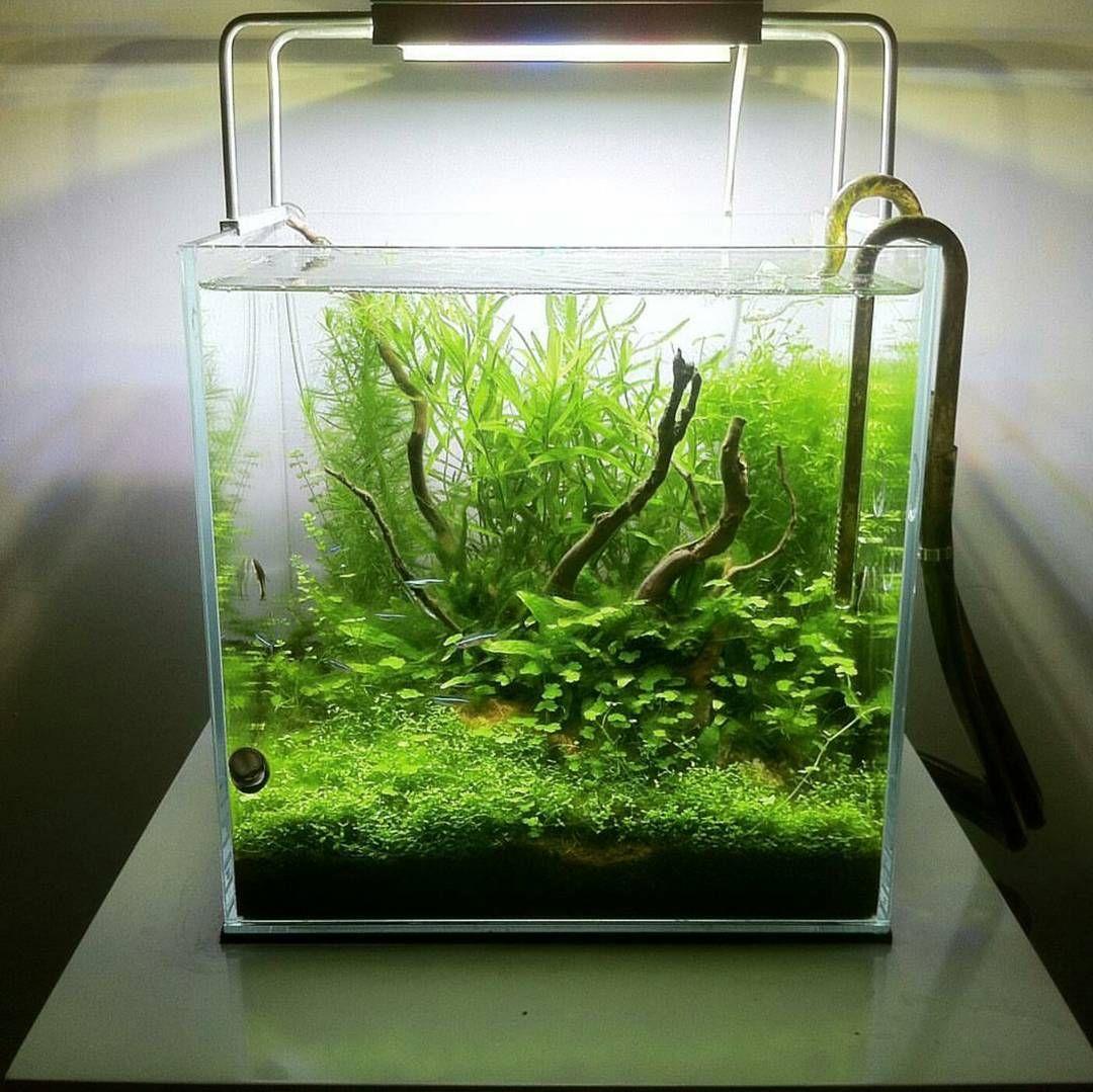 Love this nano scape by ro soch aquascaping aquarium for Plante nano aquarium