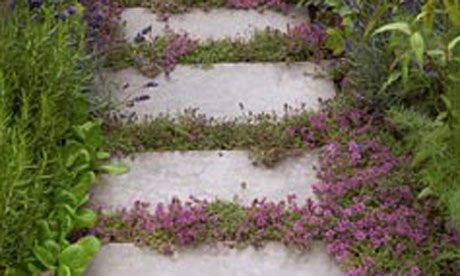 What's even more beautiful than a well-built garden path? A badly built one whose cracks are full of fragrant herbs, says Lia Leendertz
