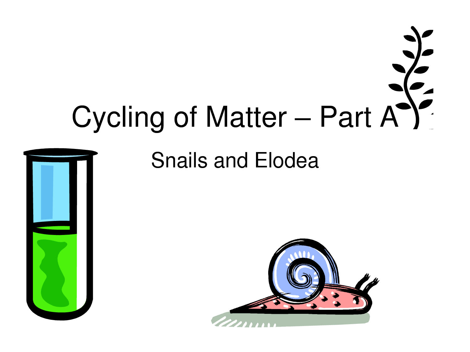 Carbon Cycle Virtual Lab With Elodea Snails Students