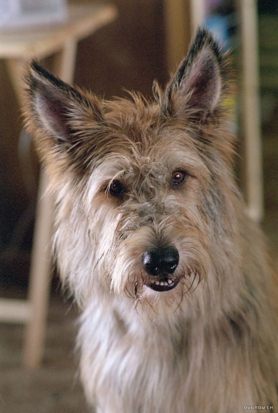 Winn Dixie...from Because of Winn Dixie | Old dogs, Therapy dogs, Dog  adoption