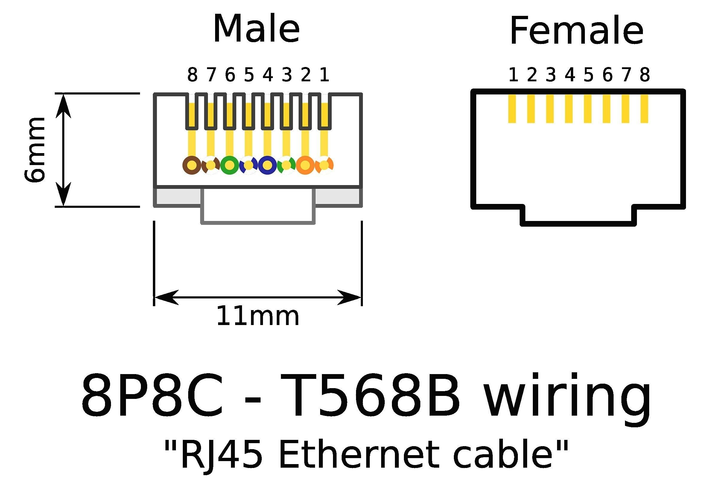 Ethernet Female Wiring Diagram