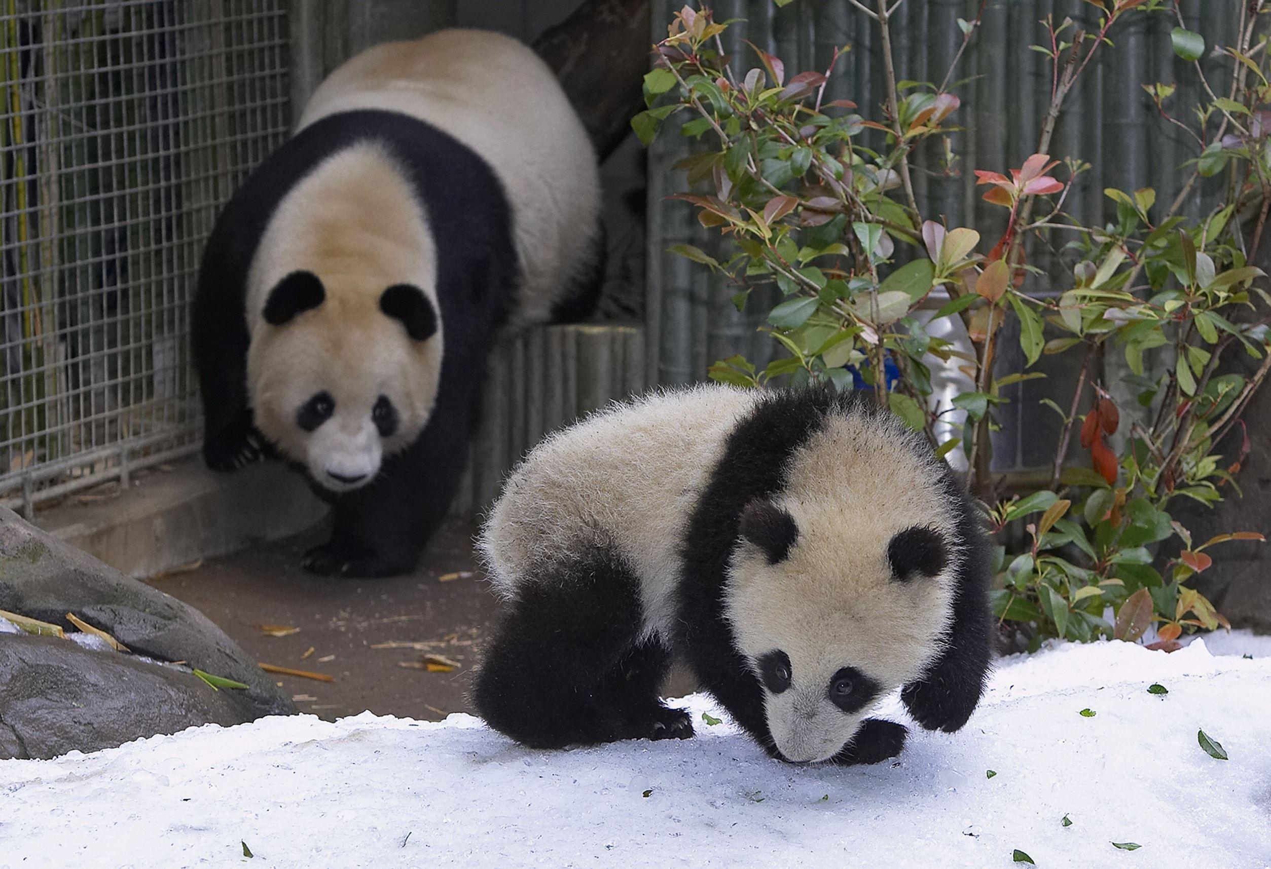 Eläinäidit ja poikaset ihastuttavat – katso kuvat!