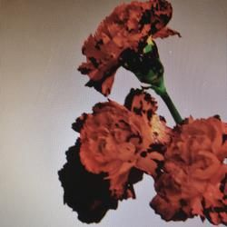 Made To Love John Legend Tips On Downloading Music From