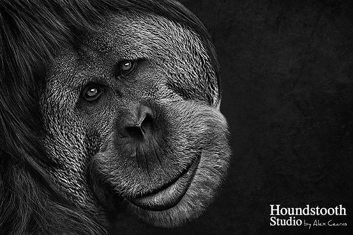 From: Alexandra Cearns  @HoundstoothStudio  http://ift.tt/1WdFk3r I love photographing our furred feathered fanged and finned friends. Alex Cearns is the International Professional Pet Photographer of the Year 2016 the author of several books a motivational speaker and a photography educator. She photographs over 1300 animals each year and calls herself a Crazy dog lady. #Womeninphotography