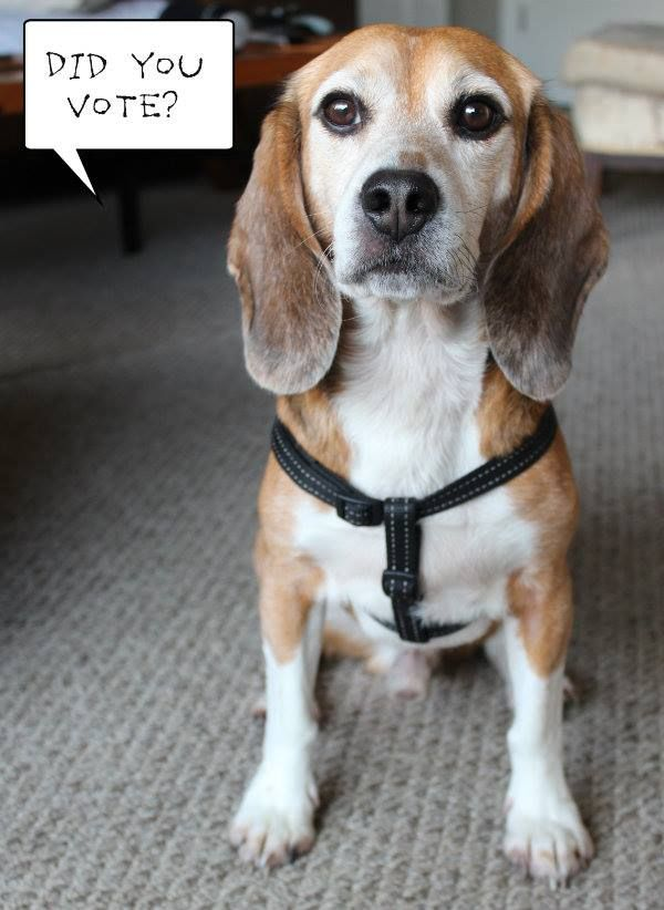 Bogart Saved By The Beagle Freedom Project Wants You To Please