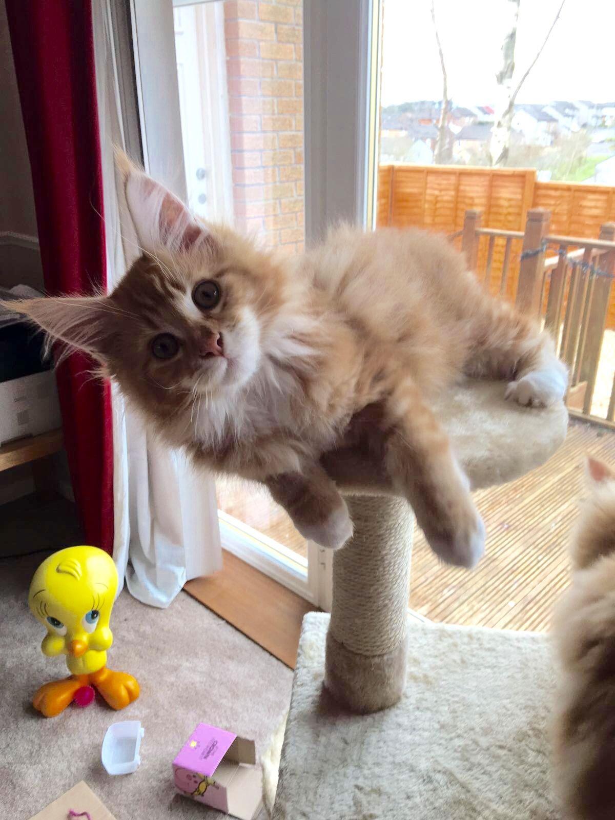 Hullo there Cute kitten pics, Sleeping kitten, Fluffy