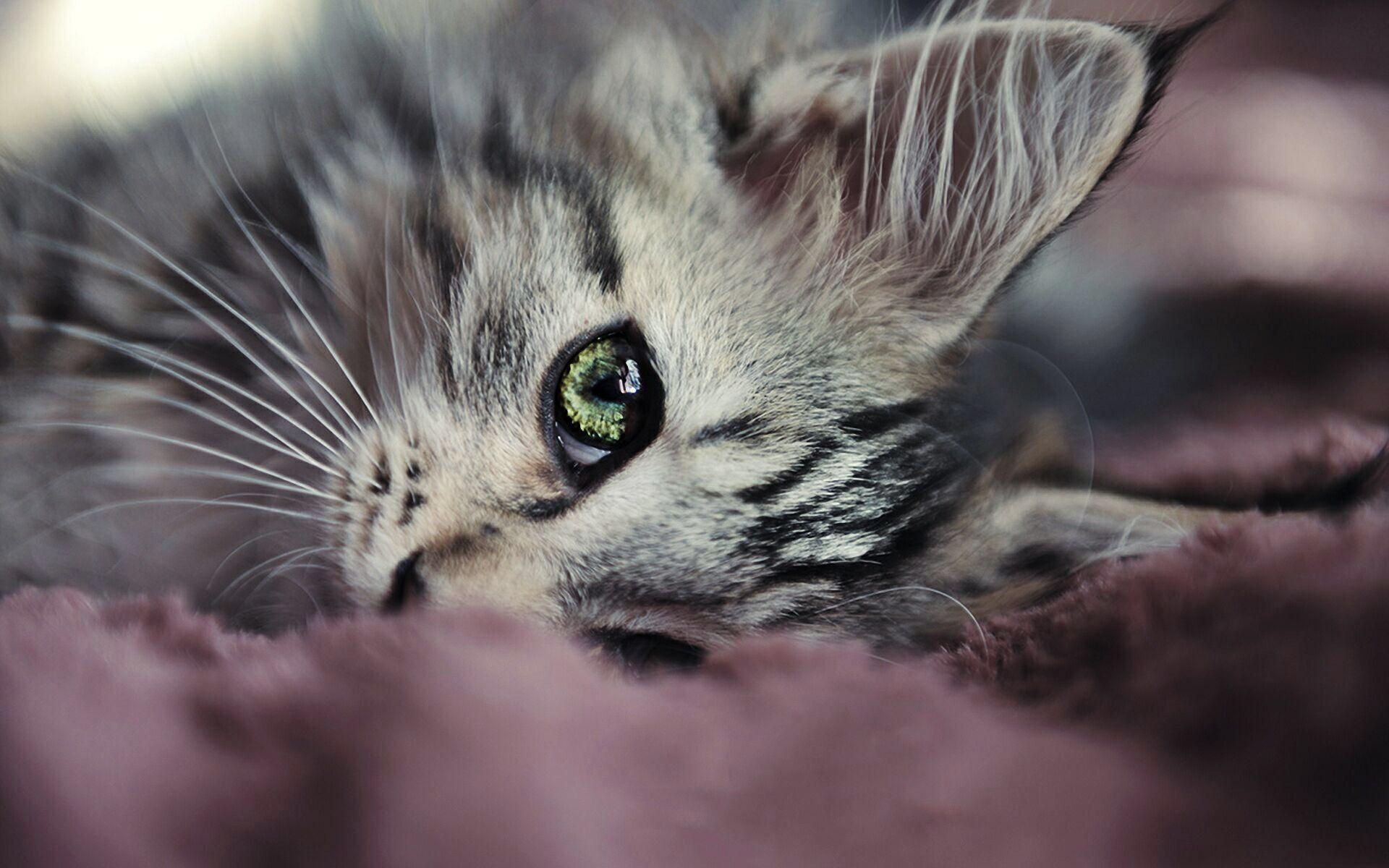 картинки про грустного котенка уверены