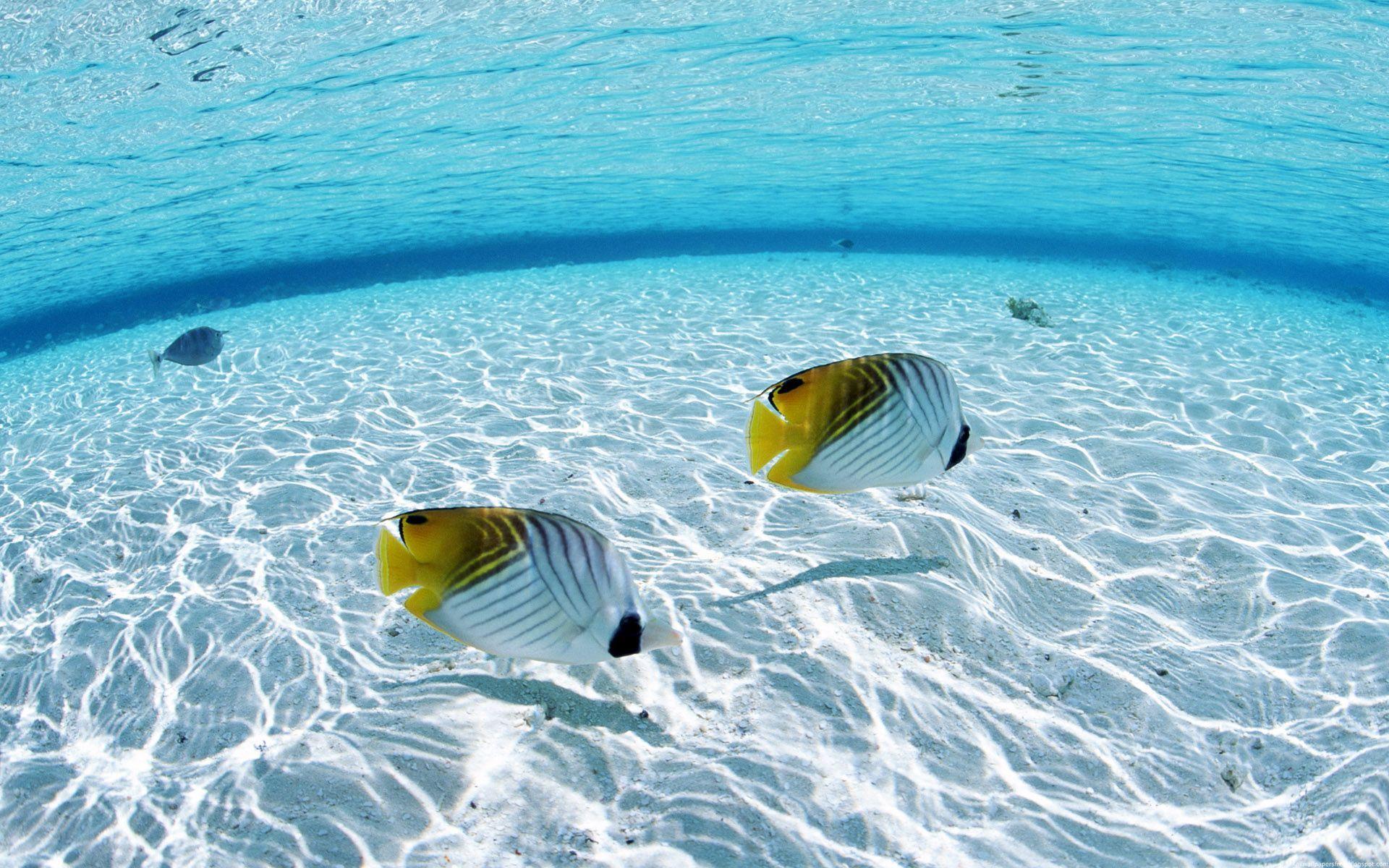 underwater Underwater) 021