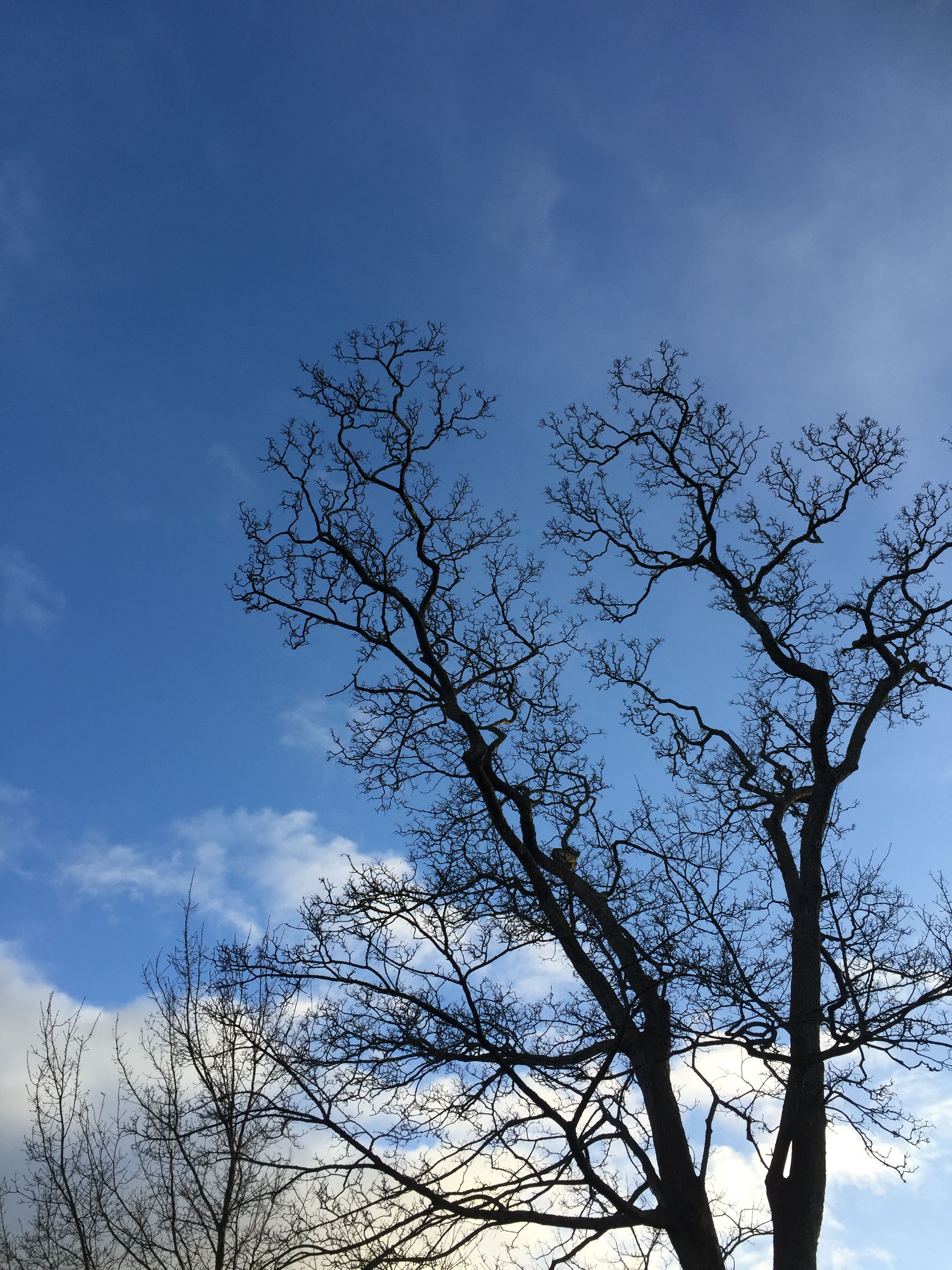 This trees branches reminded me of bronchiole and alveoli. | Freeze ...