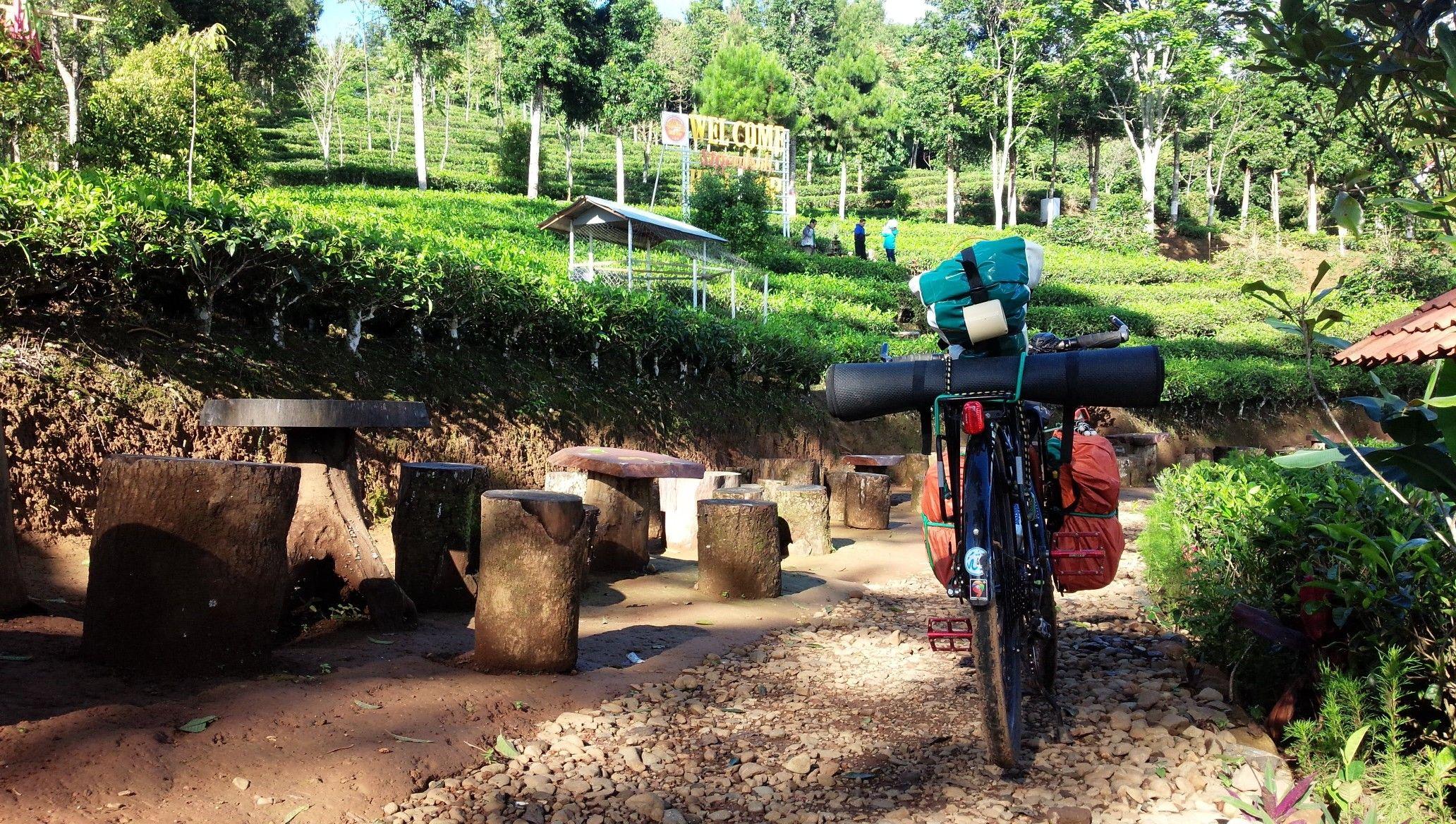 Kebun Es Teh Indonesia Temanggung