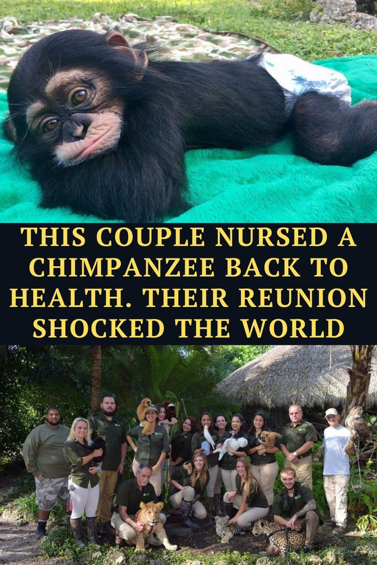 We all love heartwarming stories about super cute animals, our fluffy friends providing
