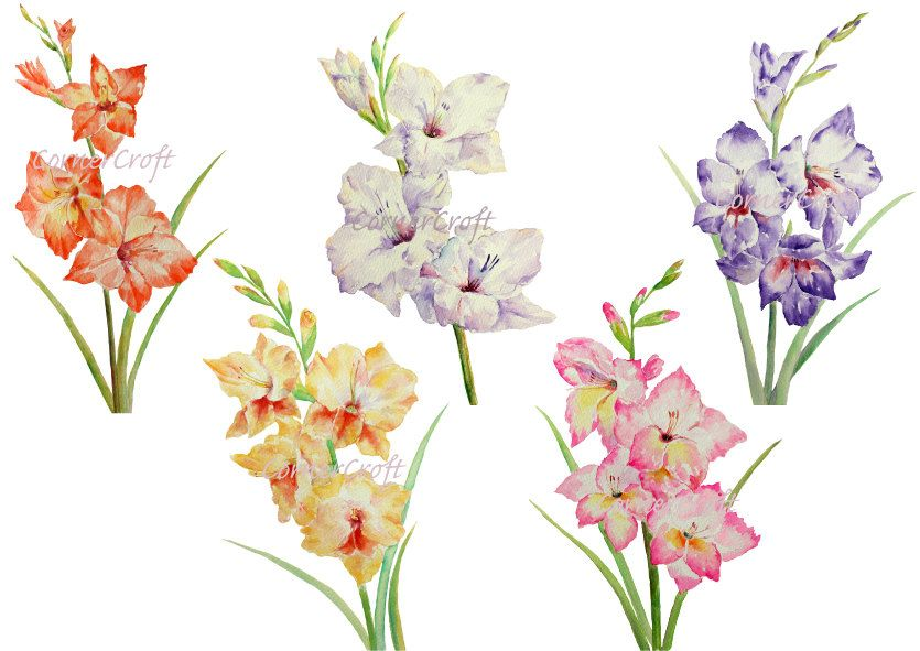 Watercolour Gladiolus White Yellow Pink Purple Orange Etsy Watercolor Flowers Gladiolus Tattoo Gladiolus Flower Tattoos