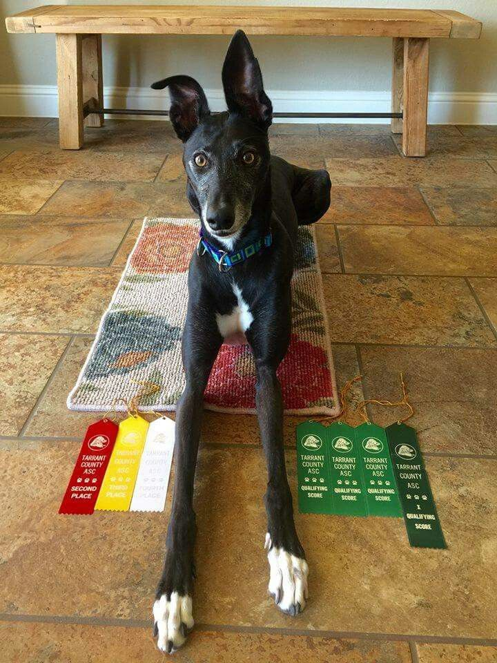 Jazzy had a fantastic weekend at the rally trials shes