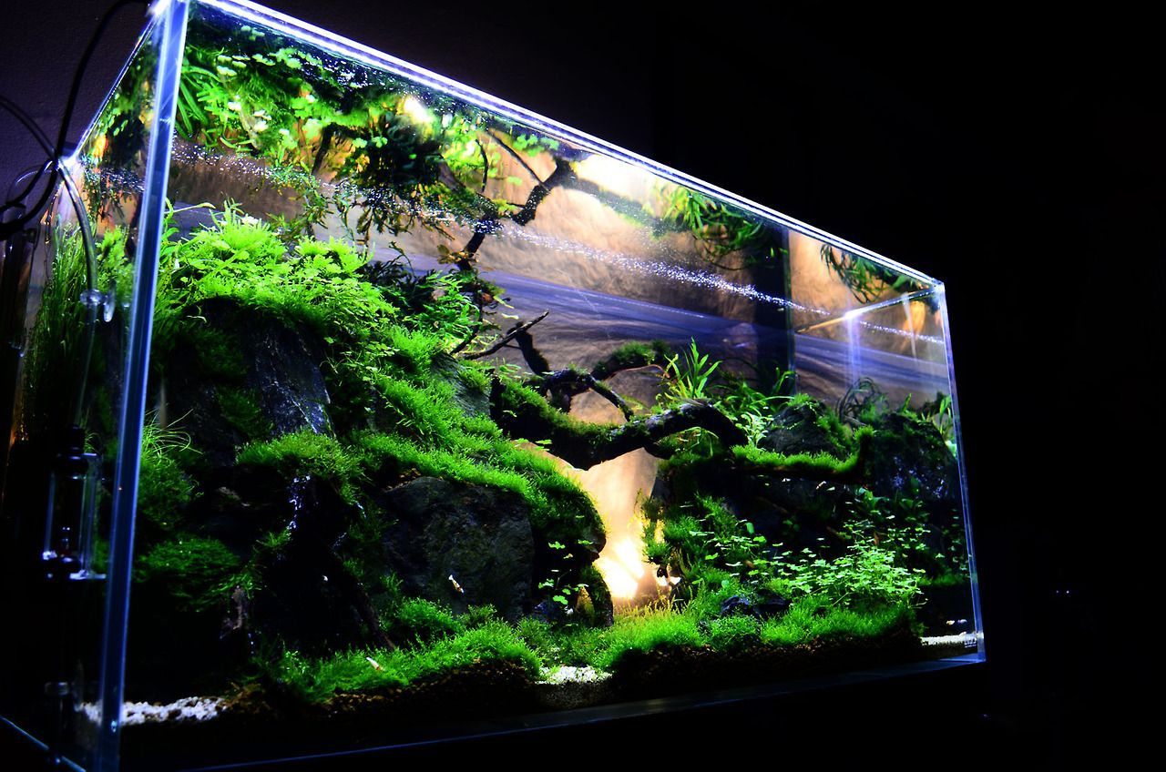 modern aquarium design with aquascape style for new interior choise rh pinterest com