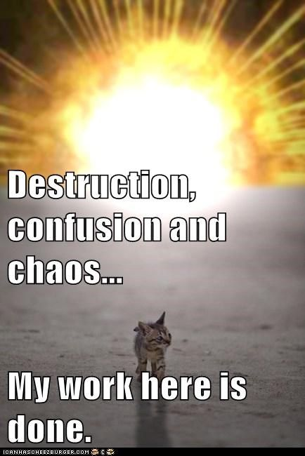 Destruction Confusion And Chaos My Work Here Is Done Funny Cat Memes Destruction Chaos