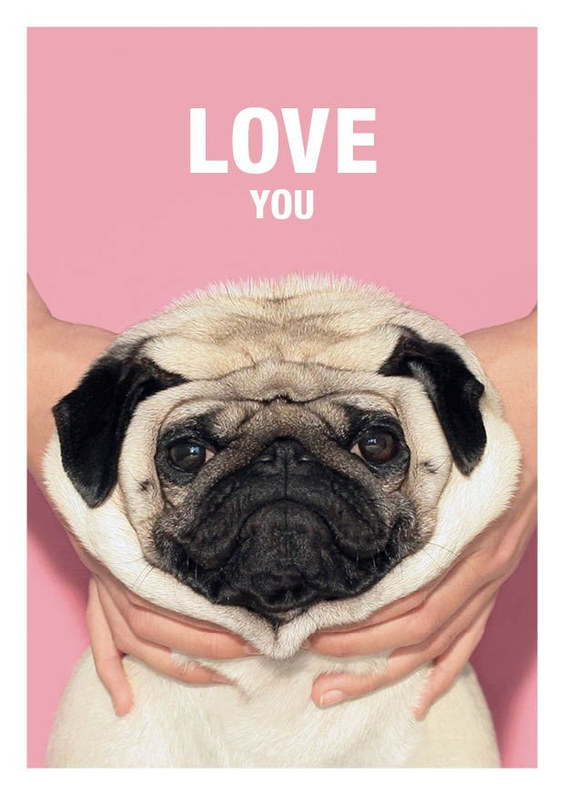 Love You Pug Valentine S Day Greeting Card Available At