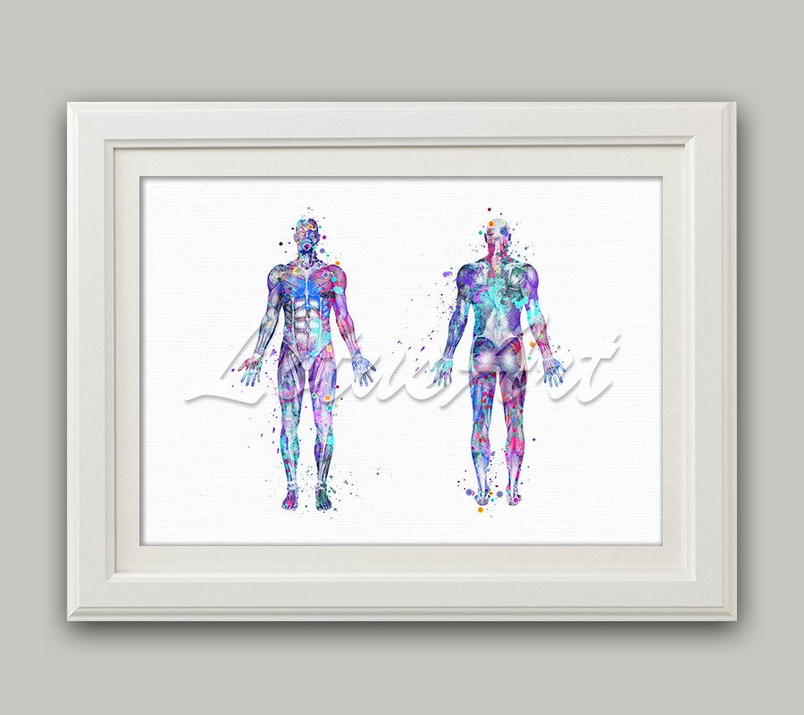 Body Muscles Art Print Watercolor Anatomy Art Clinic Wall Decor Anatomy Poster Doctor Office Gifts Human Anatomical Medical Prints #doctoroffice