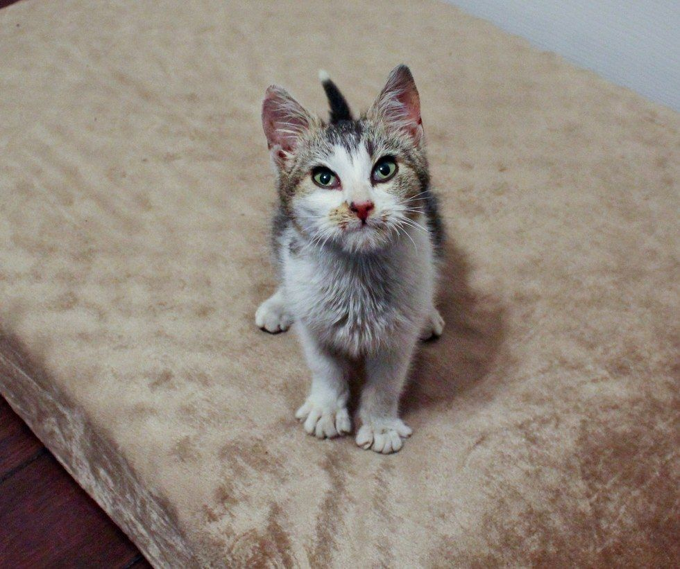Kitten Found Frozen To Blanket On Window Sill Is Brought Back To Life 2 Days After The Rescue Kitten Animal Tails Cats And Kittens