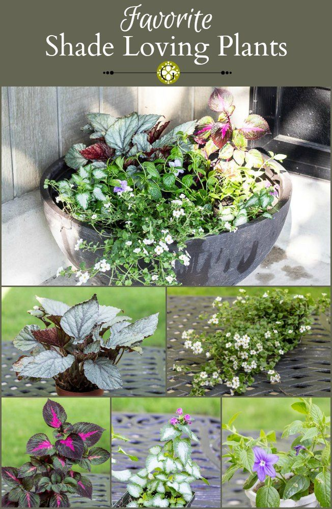 Favorite shade loving plants for the front porch front - Shade tolerant flowers ...