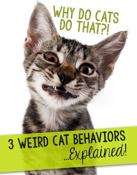 Why Do Cats Do That?! 3 Weird Cat Behaviors…Explained