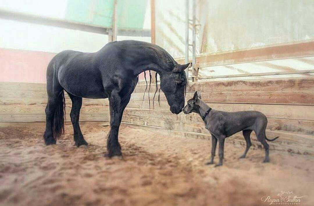 Paard & hond.