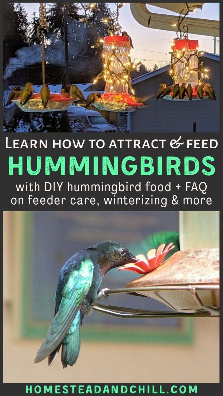 Homemade Hummingbird Food (Nectar) Recipe + Feeder Care