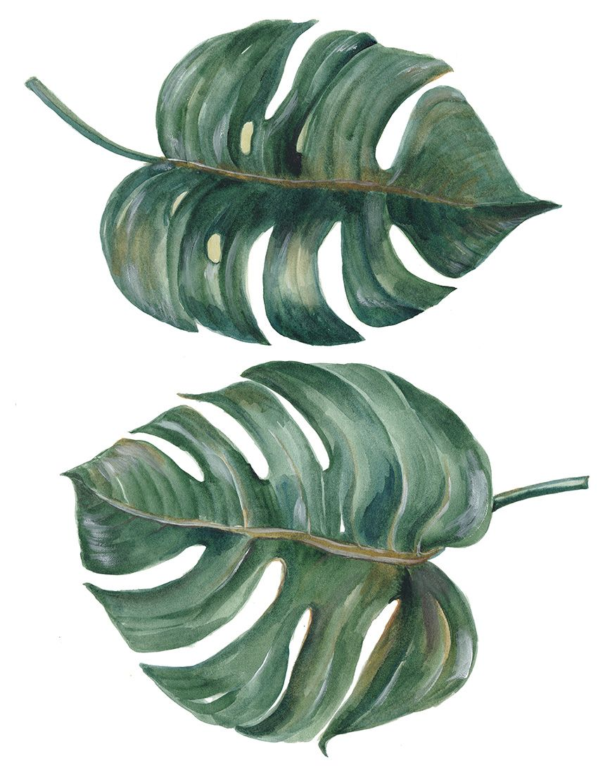Costela-de-Adão via Shutterstock   Anatomia Plantal   Pinterest ...