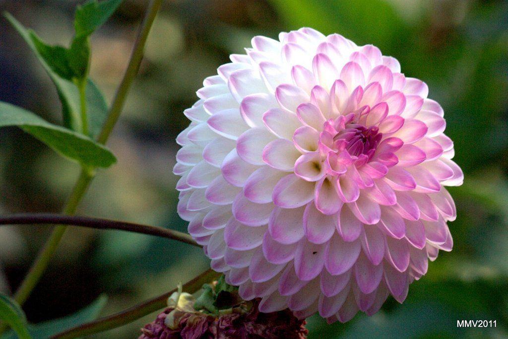 52 Twitter Plants Flowers Flower Pots