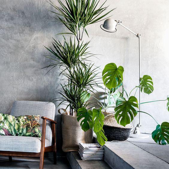 pollice verde 1 | HOME INTERIORS | Pinterest | Piante, Camera da ...