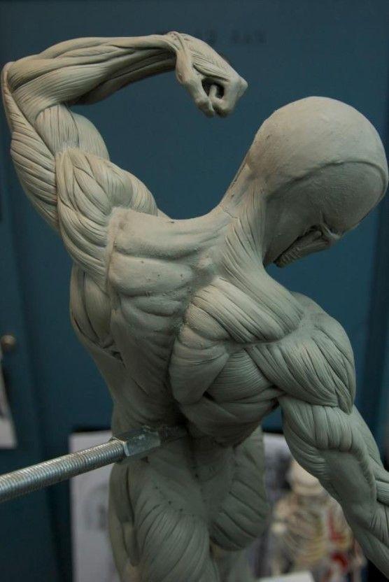 인체 자료] 팔 사진/자료 | anatomy / pose reference | Pinterest ...