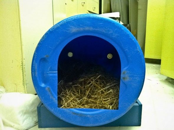 Greensboros For The Dogs Aquaponics Dog Houses Dogs Barrel