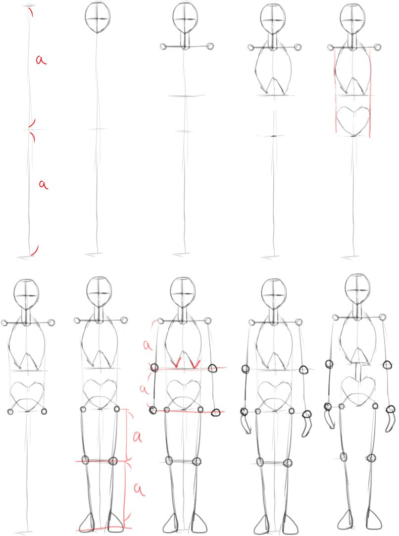 人間を描くための骸骨を組み立てよう In 2019 тело 解剖例