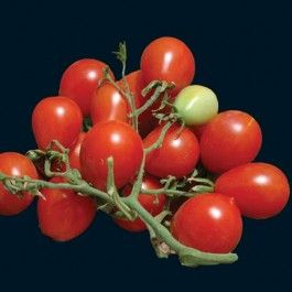 Riesentraube - Grow heirloom cherry tomatoes from seed. Best choice for sun dried.