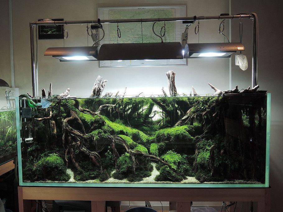 Delightful Wabi Kusa , Paludarıum , Aquascaping ,Terrarium Aquarıum Setup Added A New  Photo.