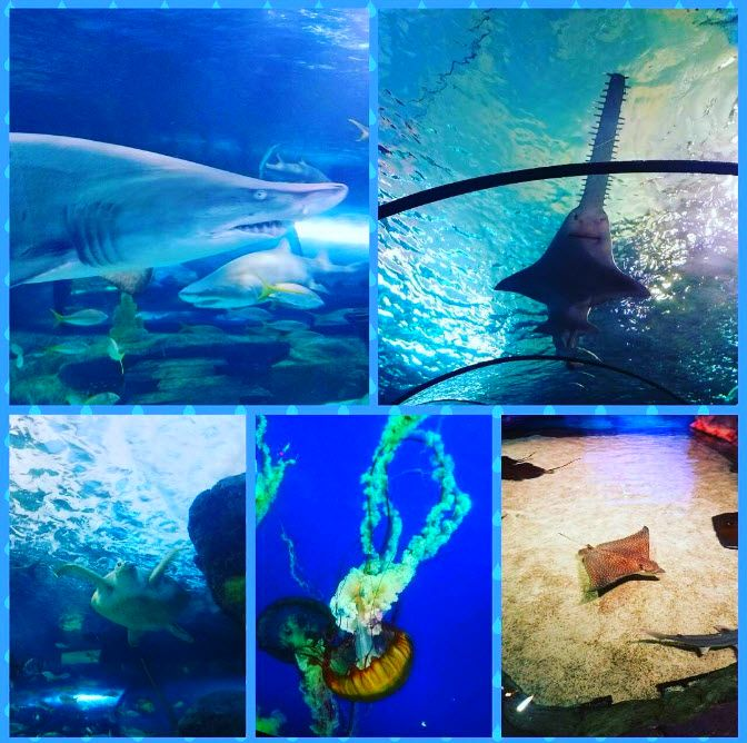 Ripley's Aquarium | Myrtle Beach | Broadway at the Beach ...
