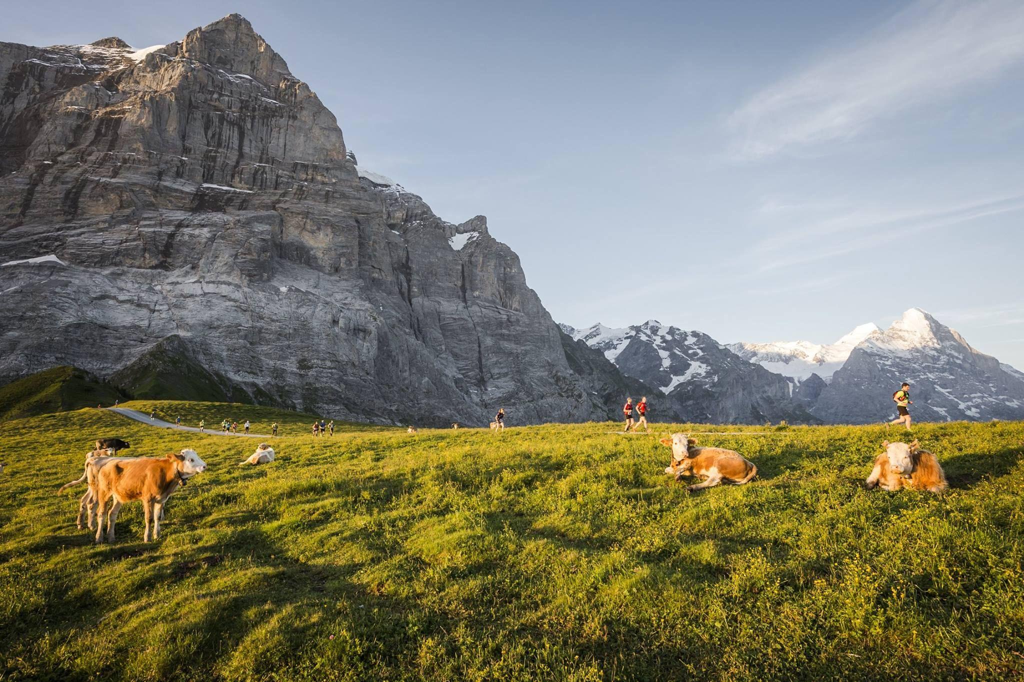 Eiger Ultra Trail https://www.facebook.com/EigerUltraTrail/photos/np.262309398.760502960/762102957237646/?type=1&ref=notif&notif_t=notify_me