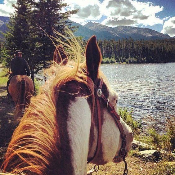 Horses | Horses, Horse love, Horse harness