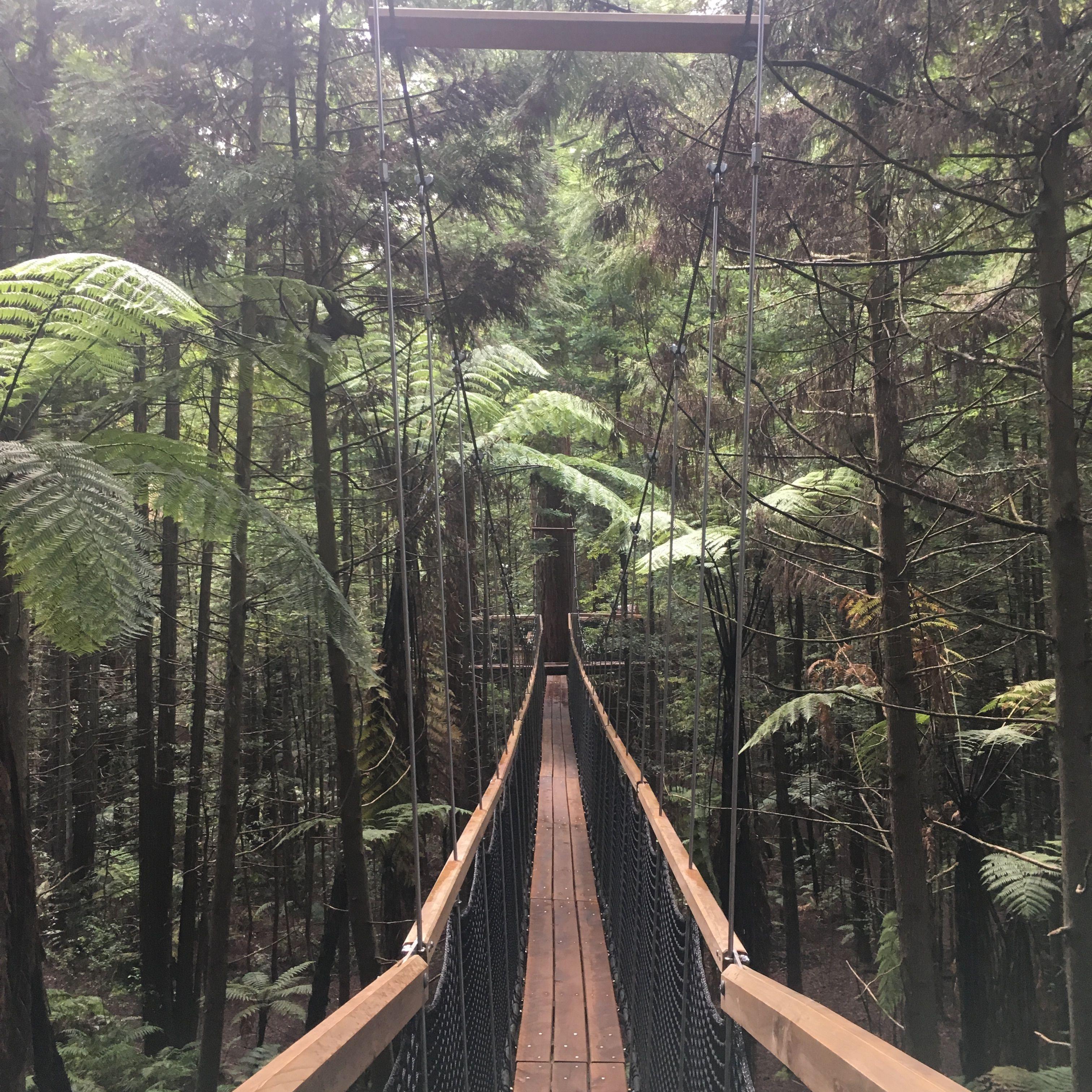 Redwoods//Rotorua//New Zealand