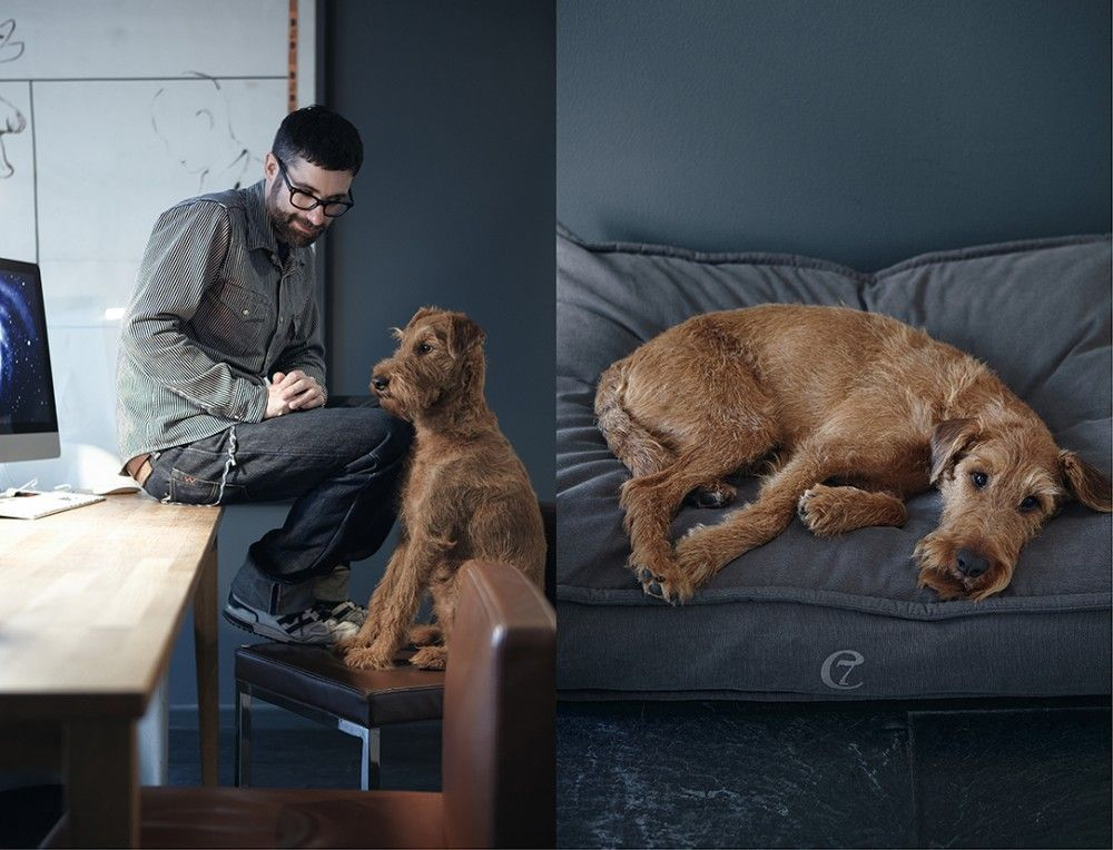Portraitgalerie With Images Cozy Dog Bed Modern Dog Dog Lovers